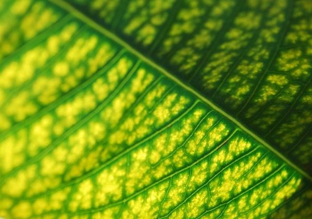 leaf close
